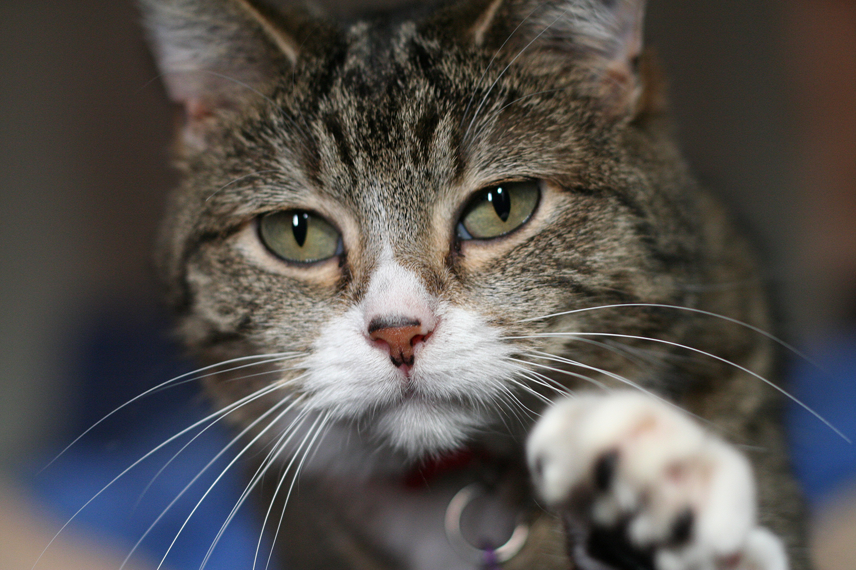 The Debunker: Do Cats Use Their Whiskers for Balance? - Woot