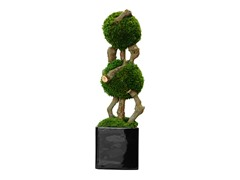 Double Wall Moss Bonsai