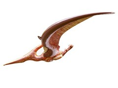 "62"" Wingspan Giant Pteranodon"