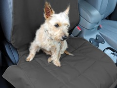 Front Car Seat Pet Protector, Anthracite