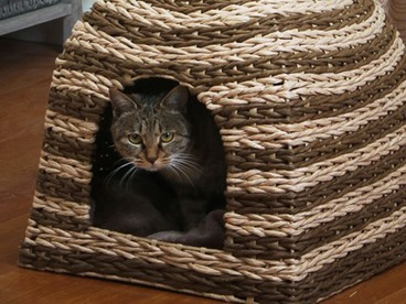 Eco Friendly Cat Habitats