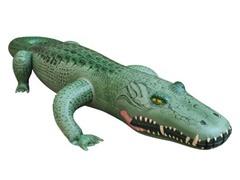 "62"" Long Alligator"