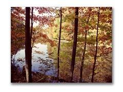 A Secret Pond by Kurt Shaffer