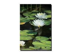 Lovely Lillies by Patty Tuggle (2 Sizes)