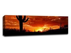 Saguaro National Park Sunset