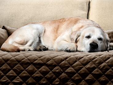 Sofa Buddy Furniture Protectors