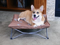 Fold and Go Small Travel Pet Bed - Tan