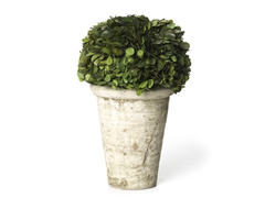 "9 or 11"" Boxwood Globe Topiary"