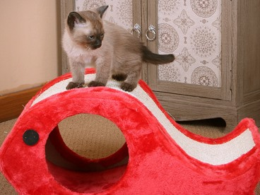 Best Sellers For Your Feline Friend