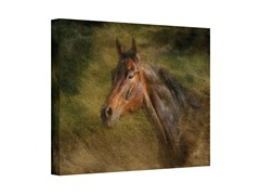 Majestic Horse Wrapped Canvas (3 Sizes)