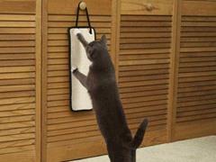 Zanies® Stretch N' Scratch Cat Scratcher - 2-Pack