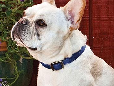 PetSafe Collars & Leashes