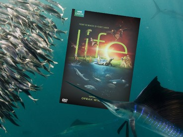 BBC Life 4-Disc DVD Set