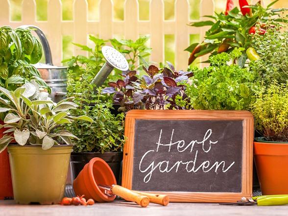 Organic Herb Starter Garden Seeds HG104452A