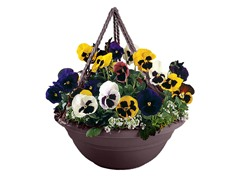 6PK Hanging Planter, 17-Inch, Exotica