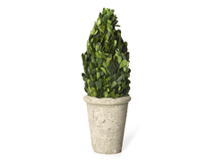 "14 or 18"" Preserved Boxwood Cone Topiary"