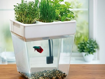 Self-Cleaning Water Garden Fish Tank