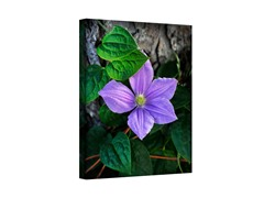 Flower Wrapped Canvas (3 Sizes)