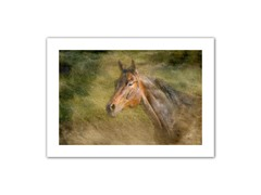 Majestic Horse 12x18 Rolled Canvas