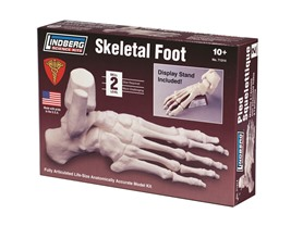 Lindberg Skeletal Foot Model Kit