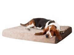 Memory Foam Dog Bed with Removable Cover - 2 Sizes