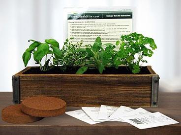 Barnwood Planter Herb Garden Kit