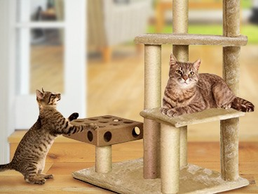 Quality Cat Trees