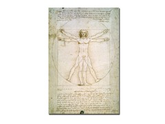 da Vinci The Proportions of the Human Figure