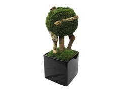 Single Ball Moss Bonsai