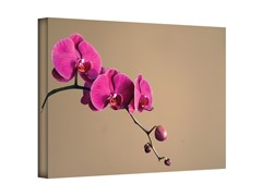Magenta Orchid by Elena Ray (3 Sizes)