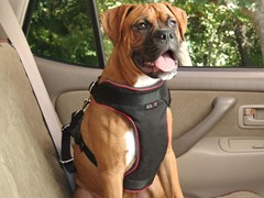 Pet Vehicle Safety Harness - Large