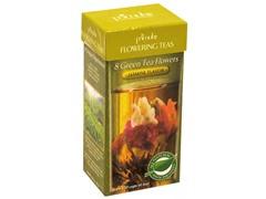 Primula Flowering Tea Jasmine 8-Pack