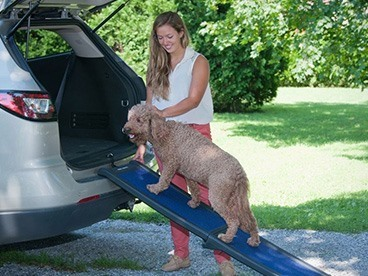 For Pets On The Go