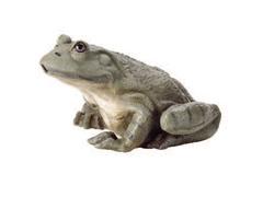 Oasis Pond Statuary - Frog