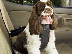 Pet Vehicle Safety Harness - Medium