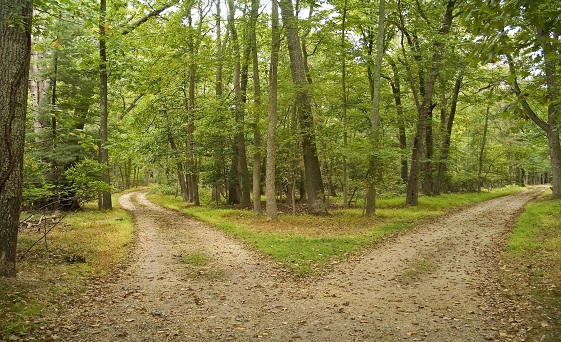 """The Debunker: Is Robert Frost's """"The Road Not Taken"""" about ..."""