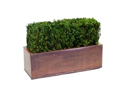 Table Top Hedge