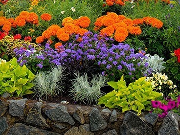 More Spring Gardening!