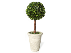 16 Boxwood Topiary with Pot