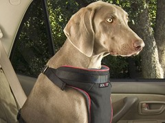 Pet Vehicle Safety Harness, Ex Large