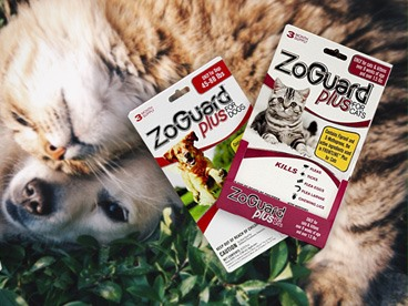 ZoGuard Plus Anti-Flea & Tick