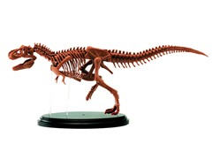 Jr Scientist T-Rex Skeleton