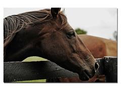 Horse 22 by Preston