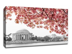 Cherry Blossoms over Jefferson Memorial