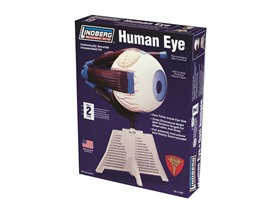 Lindberg Human Eye Model Kit