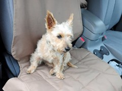 Front Car Seat Pet Protector, Tan