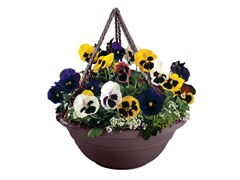 Hanging Planter, 17-Inch, Exotica