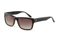 World Champion Sunglasses, Brown