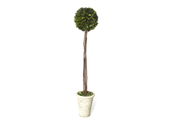 "16, 22 or 30"" Preserved Boxwood Topiary"