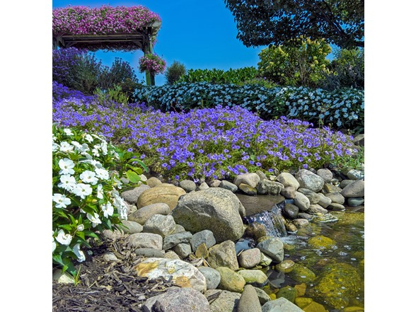 Image of Rock Garden Collection (55-bulbs)